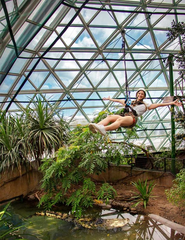 best things to do in cairns cairns zoom