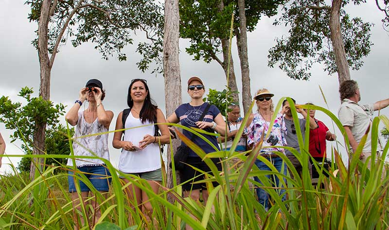 eubenanagee wetlands tour wooroonooran safaris